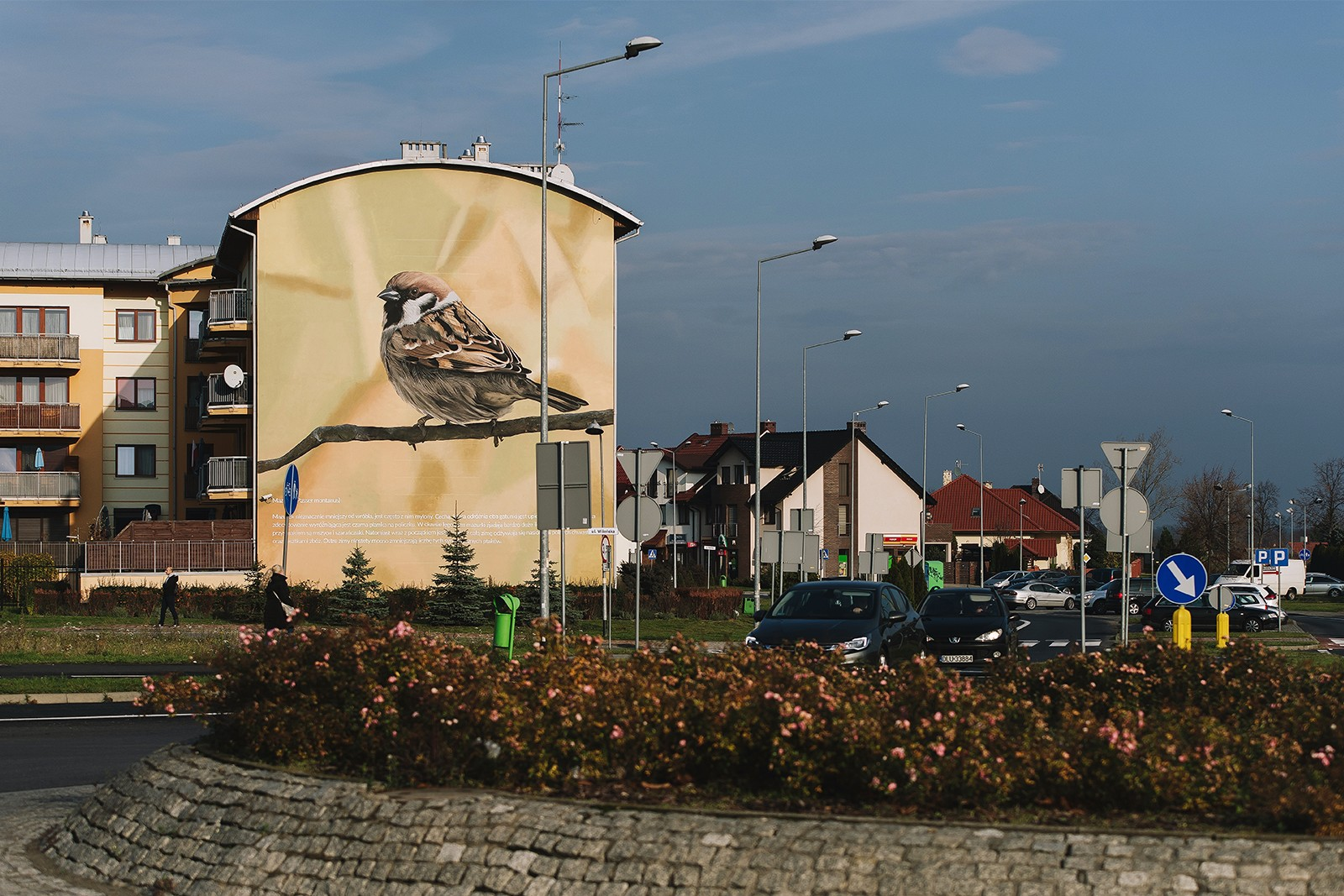 Photorealistic mural of mazurek on the Wilenska street in Lubin | Information and educational campaign in Lubin | Portfolio