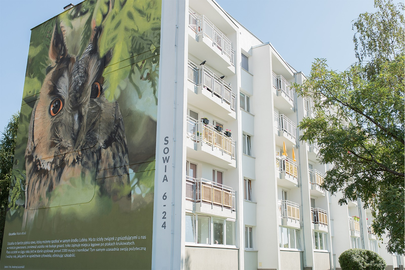 Photorealistic mural on the Sowia street in Lubin | Information and educational campaign in Lubin | Portfolio
